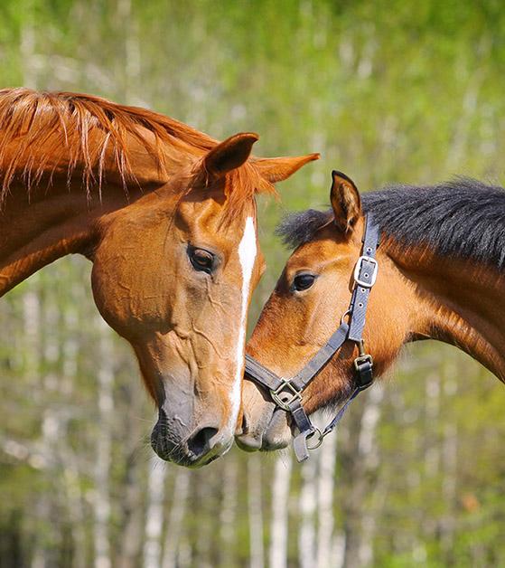 simplefeeder horse feeder